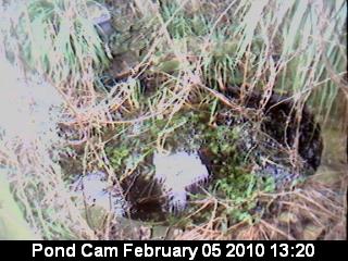 pond latest